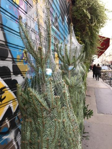 Marais tree line up.